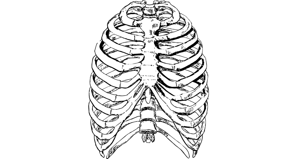 alea-quiz-le-squelette-humain