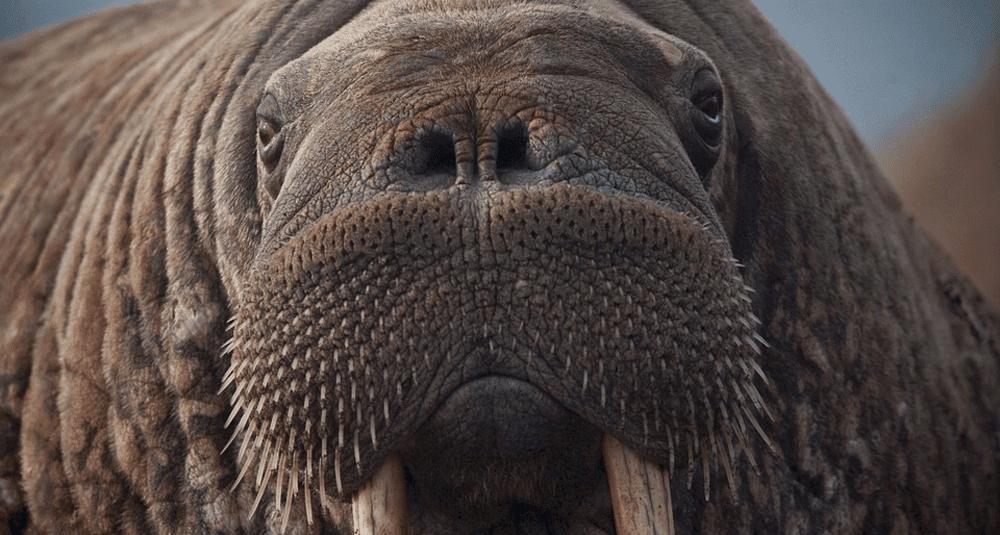 alea-quiz-les-mammiferes-marins