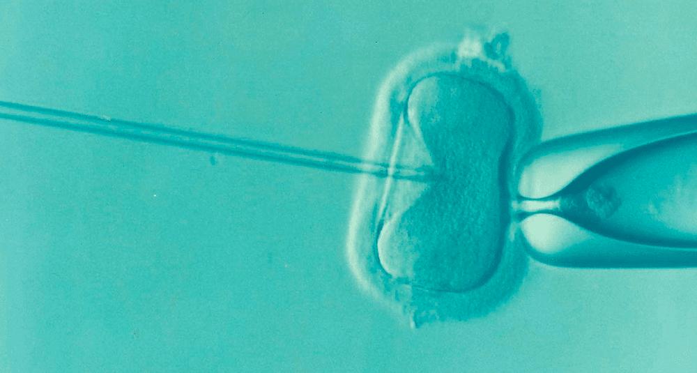 alea-quiz-en-quelle-annee-a-ete-realisee-la-premiere-fecondation-in-vitro